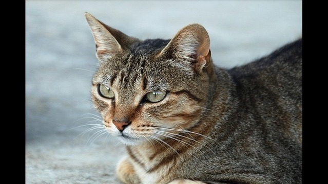 Pet Cat Tests Positive for Rabies in Cherokee Village