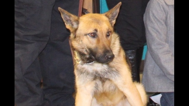 School Contest Selects Name for New Benton Police Dog