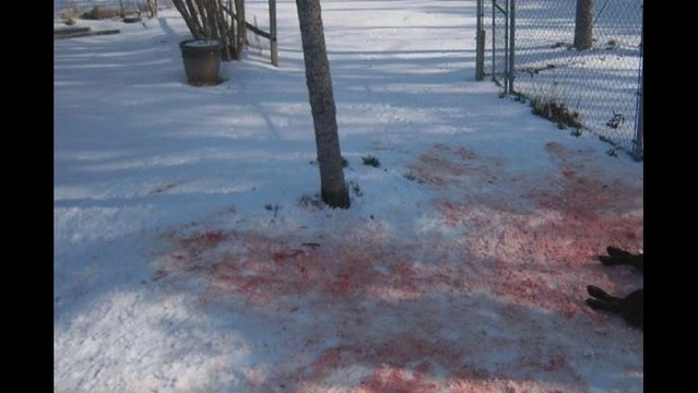 GRAPHIC PHOTO: Large Dog Killed in Animal Attack near Pocahontas