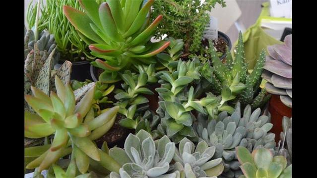 DIY: Growing Succulents