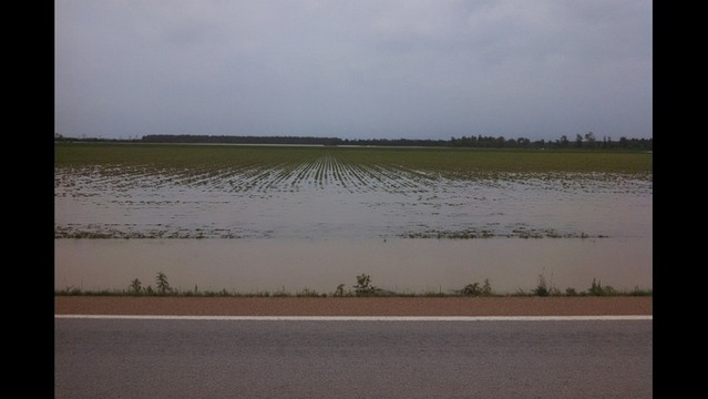 75,000 Acres of Arkansas Farmland Flooded
