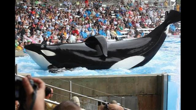 Sea World takes center stage in the debate over animal treatment