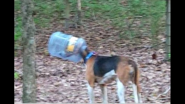 Community Still Searches for Dog with Water Jug on Its Head