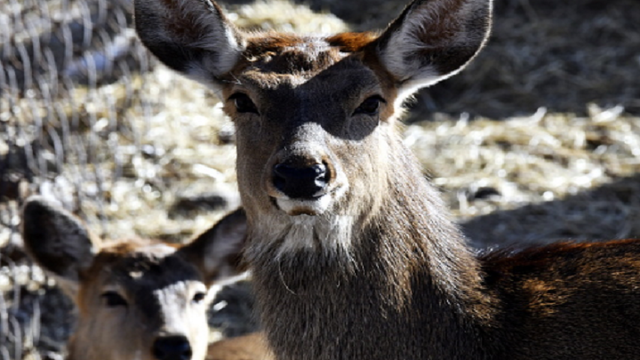 Pennsylvania Deer Tests Positive for Chronic Wasting Disease