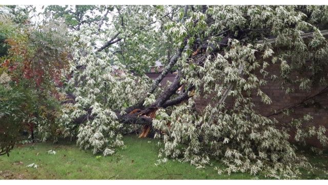Storm damage along South Durant Ave. in Russellville 6_1493227336199.PNG
