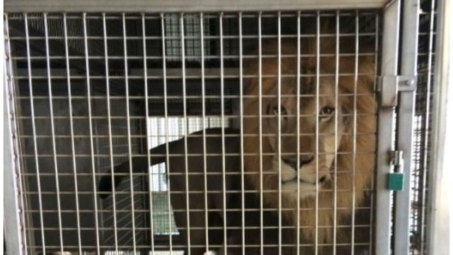 14 Exotic Cats Found in Poinsett Co. Facility