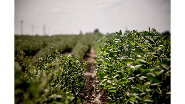 Plant Board Temporarily Bans Use of Dicamba Beginning in 2018