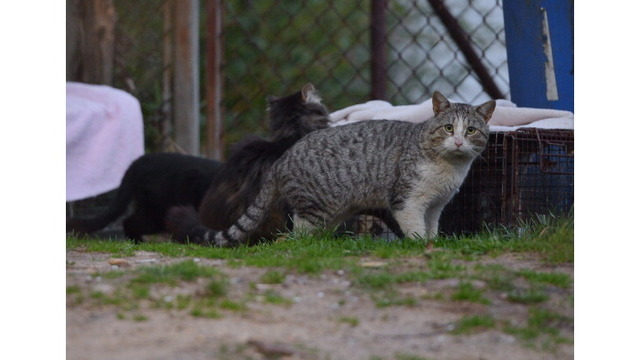 Pulaski County to Offer Free Spay and Neuter Services