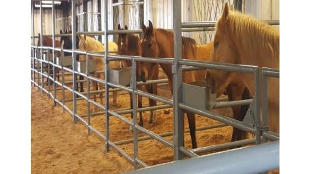 ADC to Host Annual Horse Auction